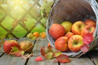 The benefits of using apple cider vinegar for weight loss